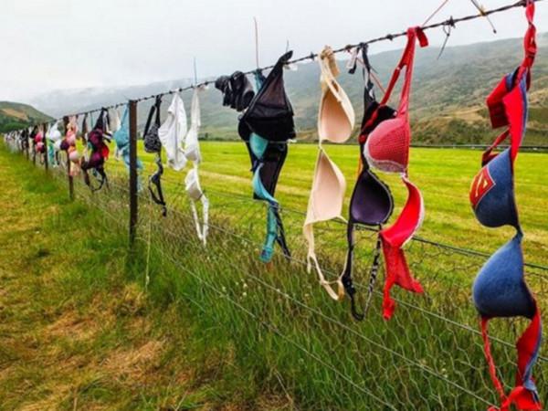 这个景点挂满10万个胸罩 打破吉尼斯世界纪录